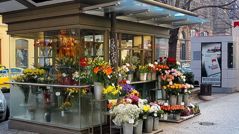 Бизнес план цветы пример титульный лист бизнес плану